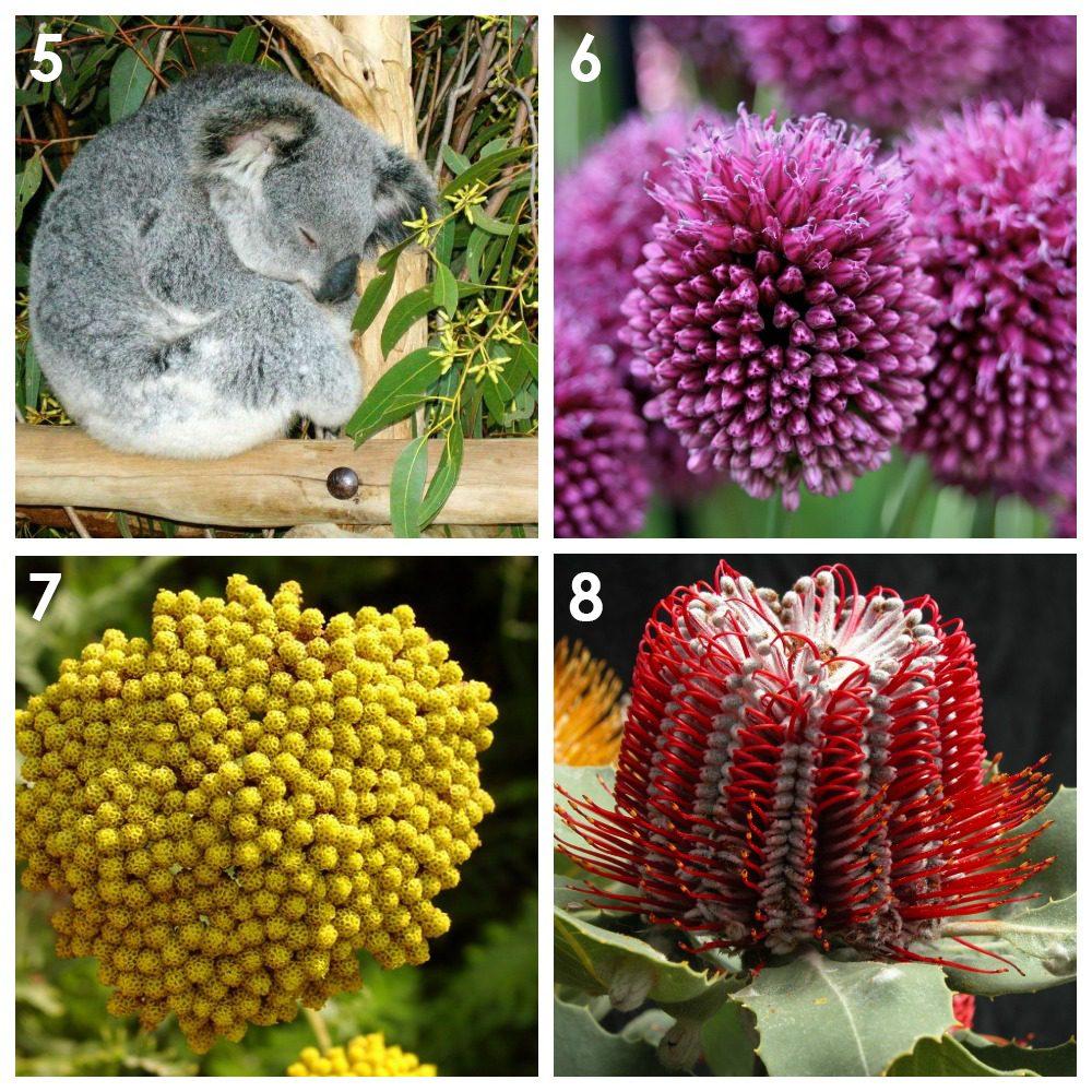 Из каких растений можно сделать сухоцветы? 2