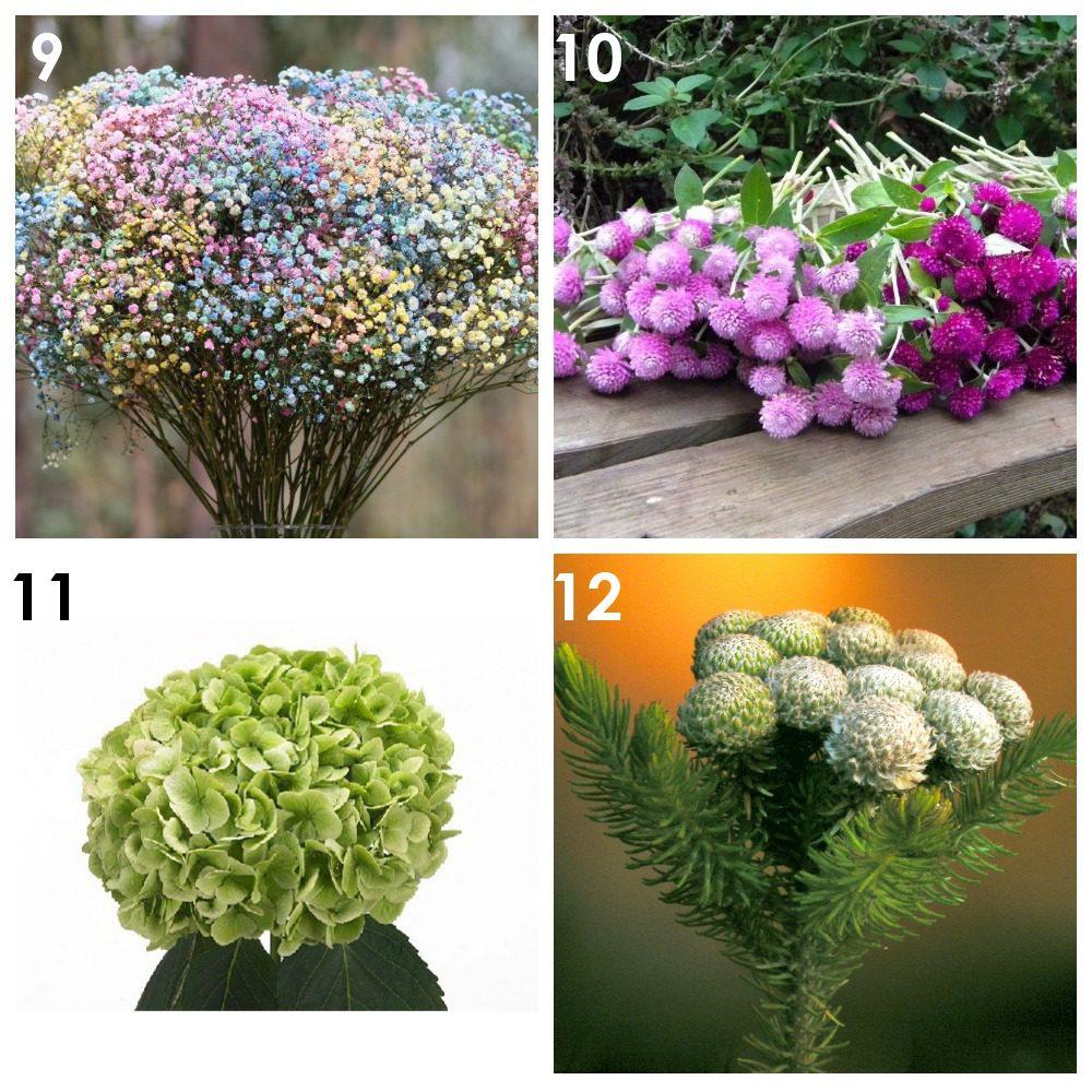 Из каких растений можно сделать сухоцветы? 3