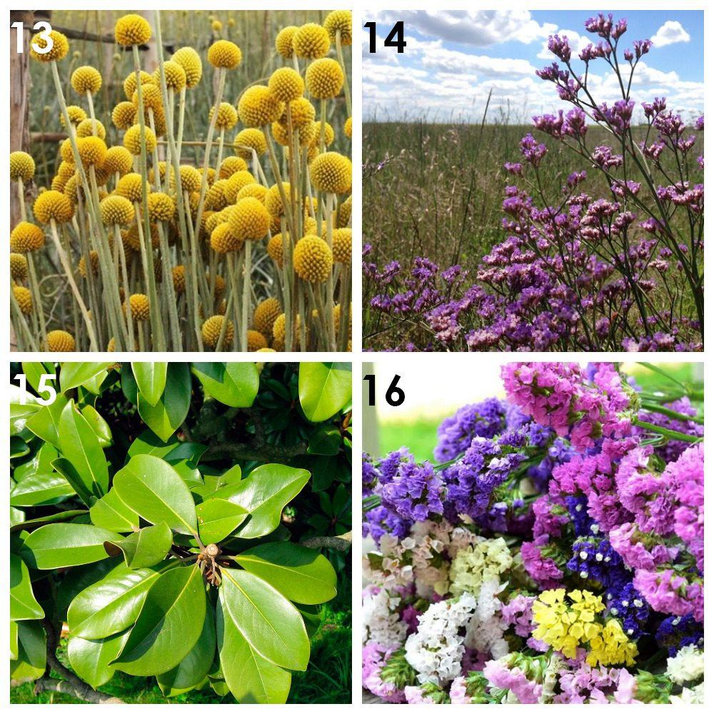 Из каких растений можно сделать сухоцветы? 4