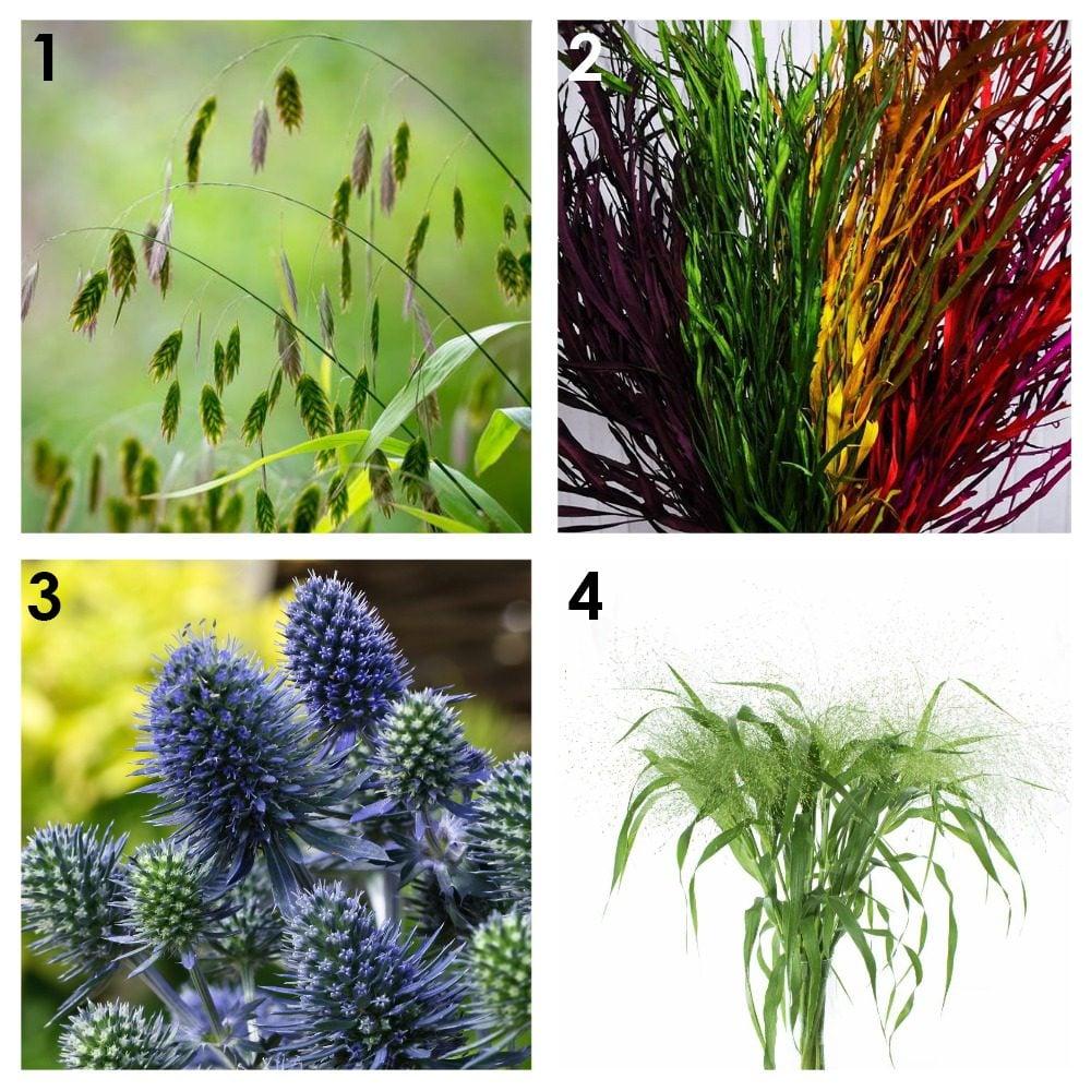 Из каких растений можно сделать сухоцветы? 1