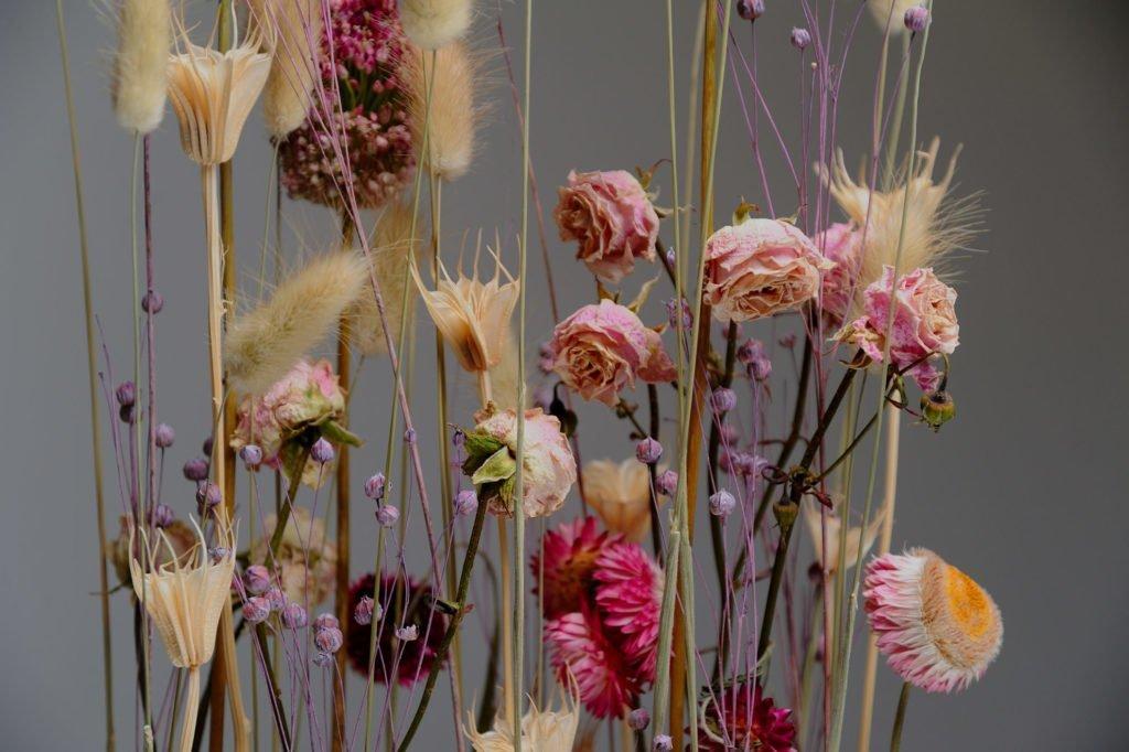 5 советов по сухоцветам! 1