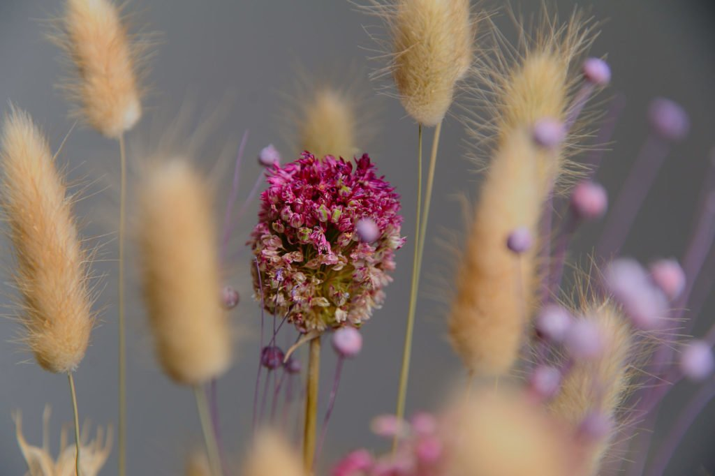 5 советов по сухоцветам! 2
