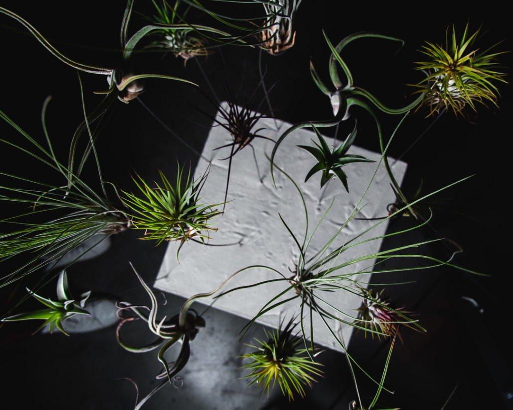 """Ботаника и фитодизайн вместе с Андреем Филоненко! 5 сессия """"Флорист дизайнер"""" 1"""